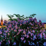 Lilacs And Sunset To Blue Hour Transition Over Gamla Stan In Stockholm Art Print