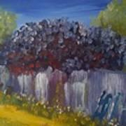 Lilacs On A Fence  Art Print by Steve Jorde