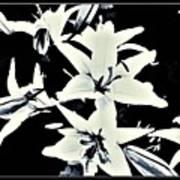 Lilies All Aglow Art Print
