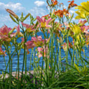 Lilies At The Waterfront Art Print