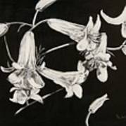Lilies Black And White Art Print by Elizabeth Lane