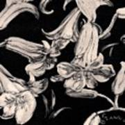 Lilies Black And White II Art Print