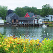 Lilies By The Bay, Cape Porpoise Me Art Print
