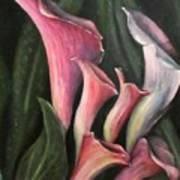 Lilies Calla Oil Painting Art Print
