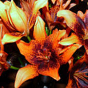 Lilies In The Shadow Art Print