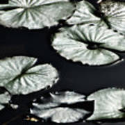 Lilies Of The Deep Art Print