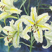 Lilies So White Art Print