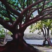 Liliuokalani Park Tree Art Print