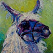 Lilloet - Llama Art Print