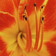 Lilly Macro Print by Michael Peychich