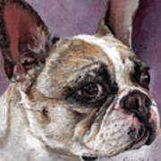 Lilly The French Bulldog Art Print