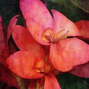 Lily 1106 Idp_2 Art Print