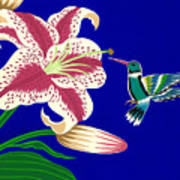 Lily And Hummingbird Art Print