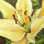Lily Dream Art Print