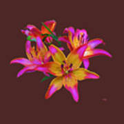 Lily Flowers Pink Maroon Art Print