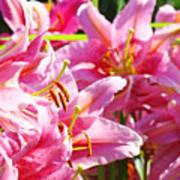 Lily Garden Floral Art Prints Pink Lilies Baslee Troutman Art Print