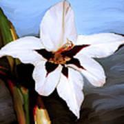 Lily I Art Print