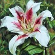 Lily Impression Art Print