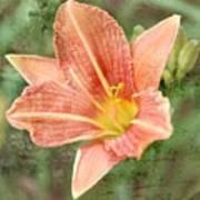 Lily In A Haze Art Print