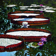 Lily Pad Highlights Art Print