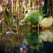 Lily Pad Reflection Oil Art Print