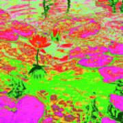 Lily Pads And Koi 19 Art Print