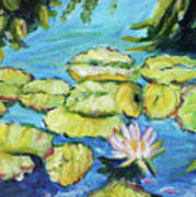 Lily Pads Mo Botanical Garden I Art Print
