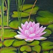 Lily Pond And Pink Art Print
