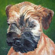 Lily, Soft Coated Wheaten Puppy Art Print
