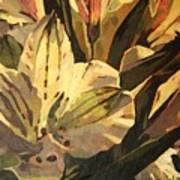 Lily White Art Print