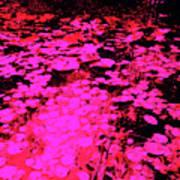 Lilypad 13 2 Art Print