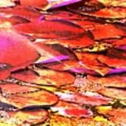 Crimson Lilypads Floating.. Art Print