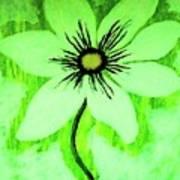 Lime Daisy Art Print