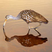 Limpkin In The Mirror Art Print