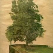 Linden Tree On A Bastion 1494 Art Print