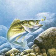 Lindy Walleye Art Print