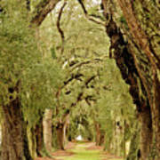 Line Of Oak Trees To Distance Art Print