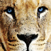 Lion Art - Blue Eyed King Art Print by Sharon Cummings