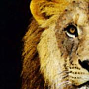 Lion Art - Face Off Art Print
