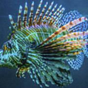 Lion Fish Art Print