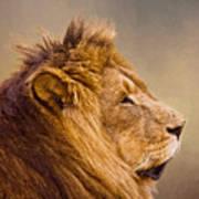 Lion Head Art Print