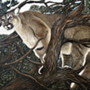 Lion In The Tree Art Print
