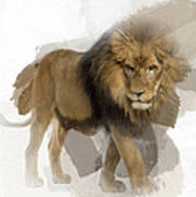 Lion Lion Lion Art Print