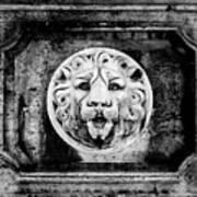 Lion Of Rome Art Print