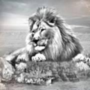 Lion Resting  Art Print