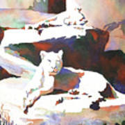 Lionesses At Zoo Art Print