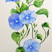 Liseron Art Print