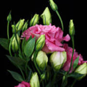 Lisianthus Flowers Art Print