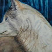 Listening Coyote Art Print