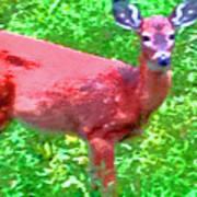 Listening Deer Art Print